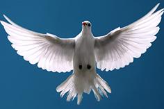 036 पवित्र आत्मा