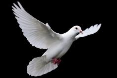 039 peut faire confiance au Saint-Esprit pour la sauver