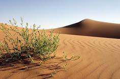 384 u zhvillua në shkretëtirë