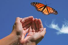 591 quello del bruco alla farfalla